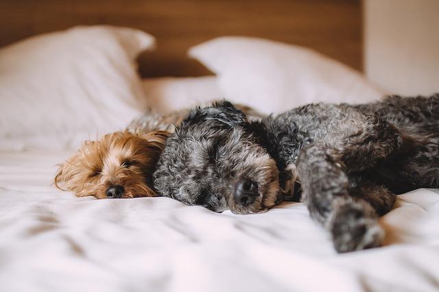 domácí zvířata v posteli.jpg